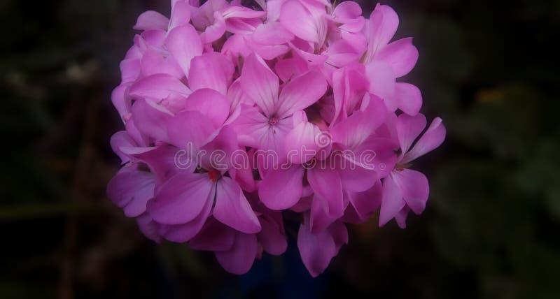 piękne kwiaty obraz stock