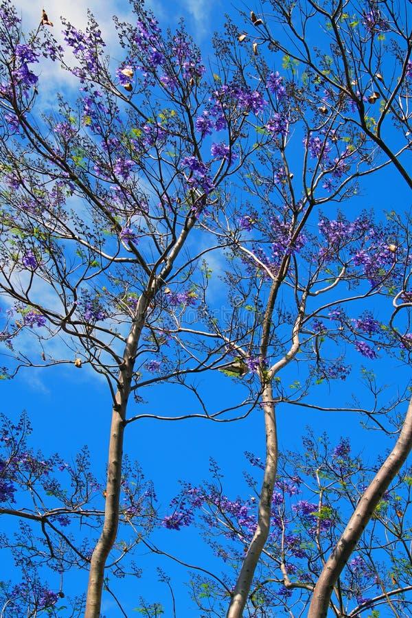 Piękne kwiaty na wiosennych drzewach Sezony natury Strzałka w pionie fotografia stock