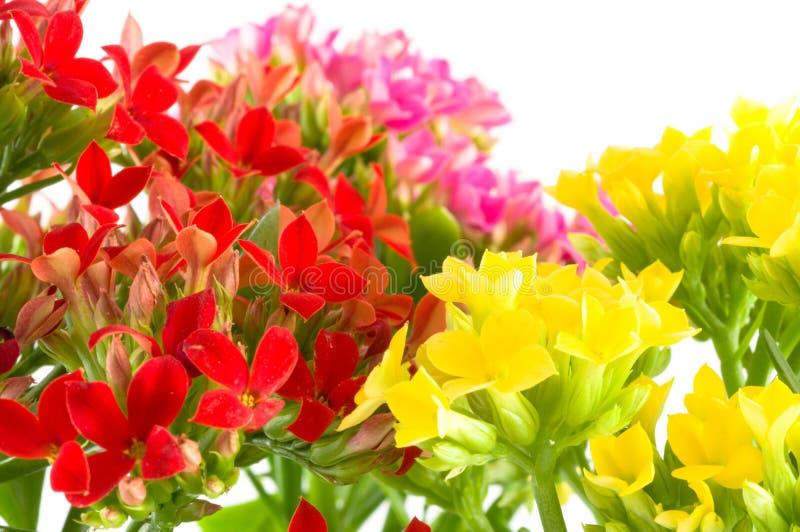 piękne kwiaty, wiosna makro obrazy royalty free