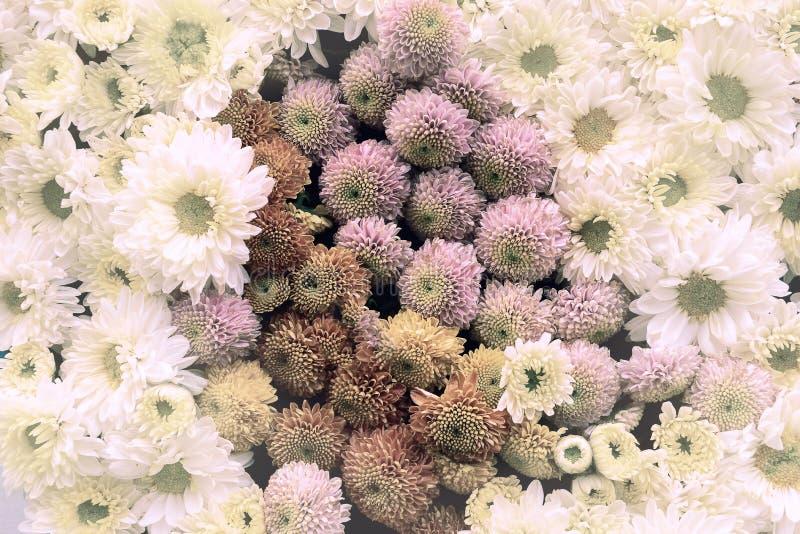 Piękne Kwiaty Zamknięcia Tła, Styl Natury Tła obraz stock