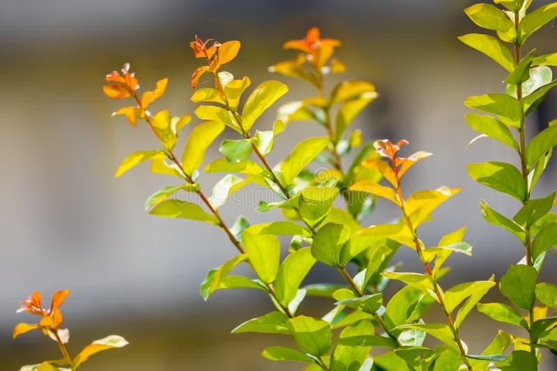 Piękne liść gałąź błyszczy w świetle słonecznym obrazy royalty free