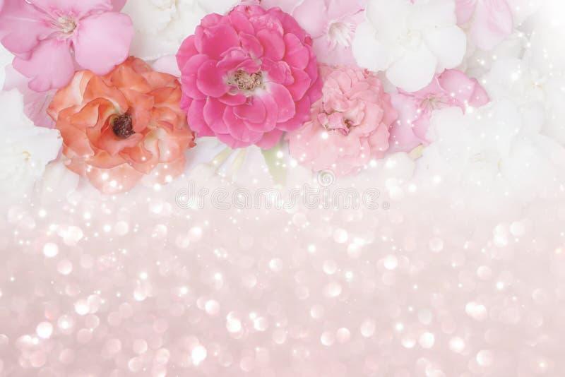 Piękne menchie, pomarańcze, białe róże kwitną rabatowego błyskotliwości tło zdjęcie stock