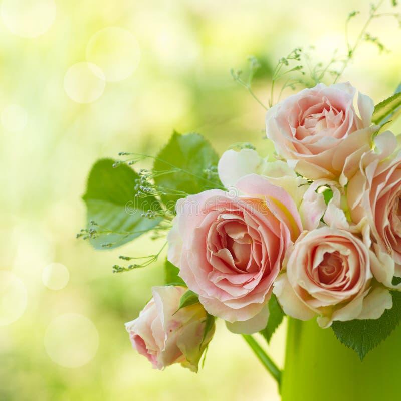 Piękne menchie wzrastali w ogródzie obrazy royalty free