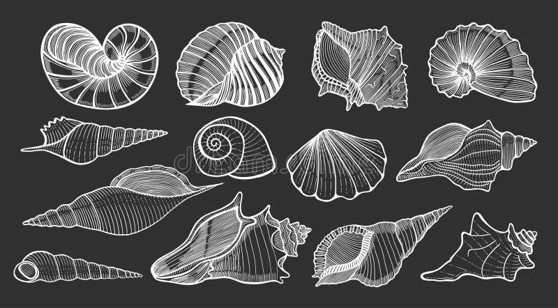 Piękne mollusk morza skorupy royalty ilustracja