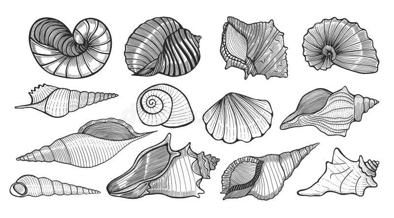 Piękne mollusk morza skorupy ilustracji