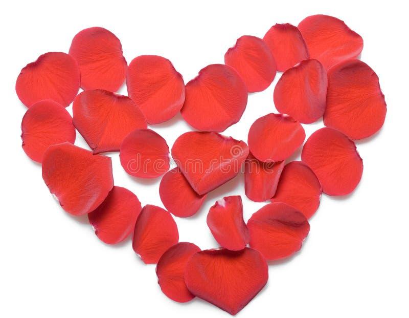 piękne płatków czerwieni róże zdjęcie stock