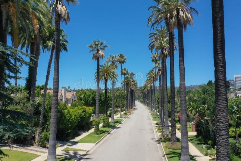 PiÄ™kne palmy w Beverly Hills, Kalifornia fotografia stock