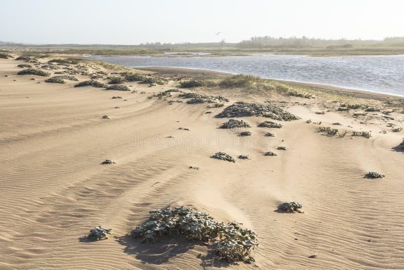 Piękne piasek diuny w St Lucia w Południowa Afryka obraz stock