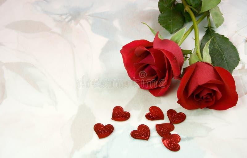 Piękne róże. zdjęcie stock