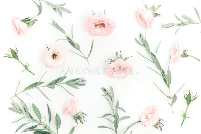 Piękne różowe róż głowy na różowym tle obraz stock