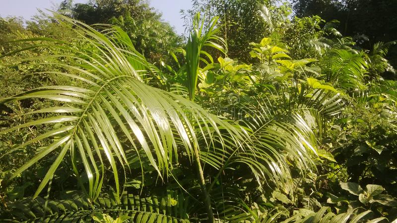 Piękne rośliny obrazy royalty free