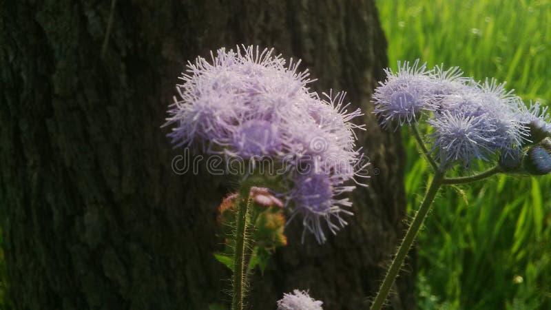 Piękne rośliny fotografia royalty free