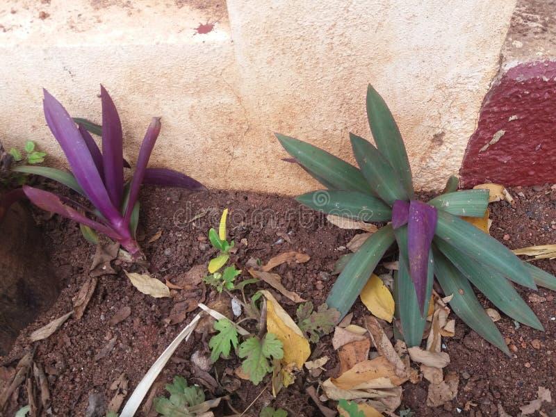 Piękne rośliny w gardern zdjęcia royalty free