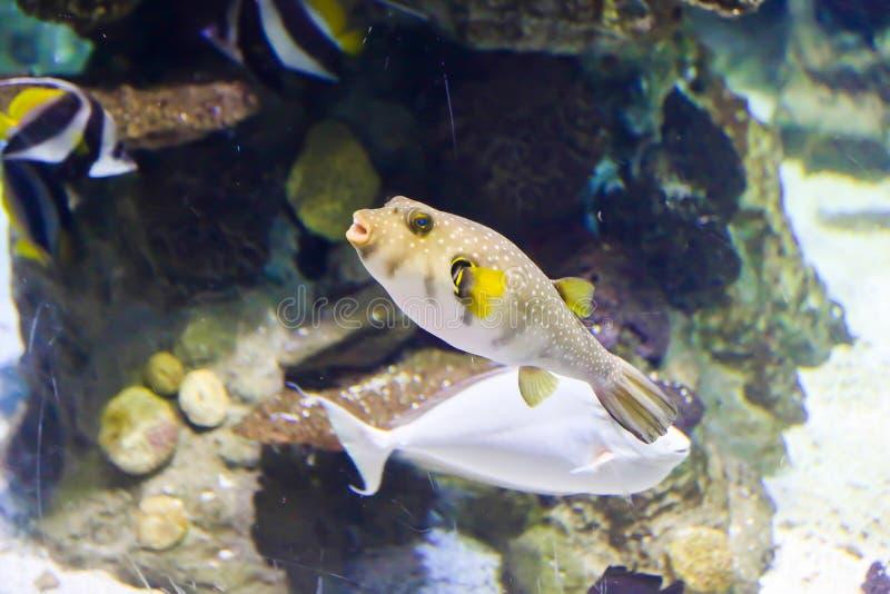 piękne ryby obrazy stock