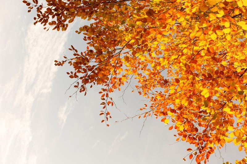 Piękne spadek gałąź, jaskrawy tło zdjęcia stock
