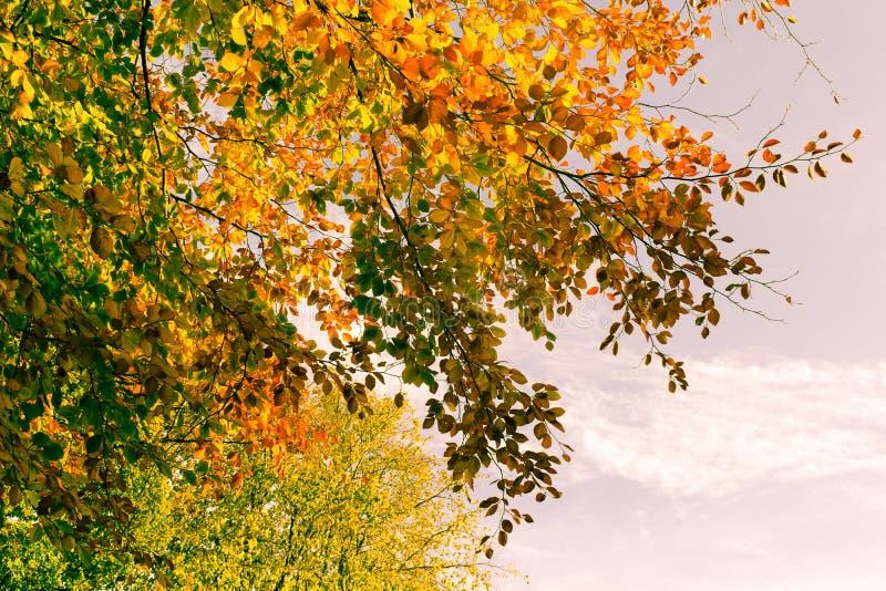 Piękne spadek gałąź, jaskrawy tło fotografia stock