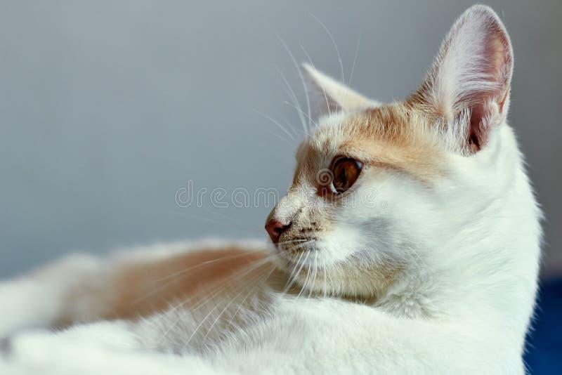 Piękne wąsy kota szarość obraz stock