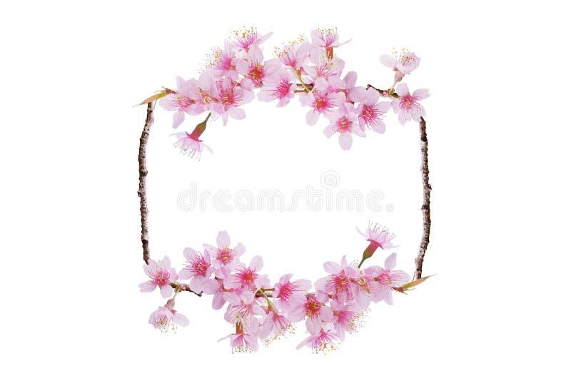 Piękne wiosenne kwitnące tło na granicy, naturalny układ ramy tło różowego kwitnącego kwiatu Sakura z młodymi liśćmi fotografia royalty free