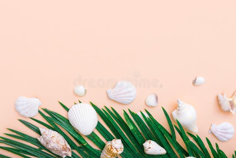 Piękne zielone palmowego liścia białego morza skorupy na pastelowych menchiach izolują tło Eleganckiego lata tropikalny nautyczny zdjęcie royalty free