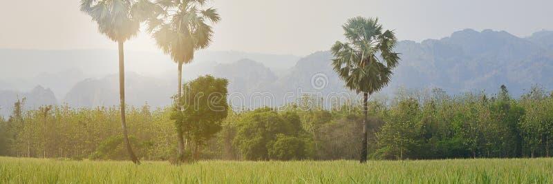 Piękne zielone pole ryżowe z niebieskim niebem na tle górskim, baner reklamy obrazy stock