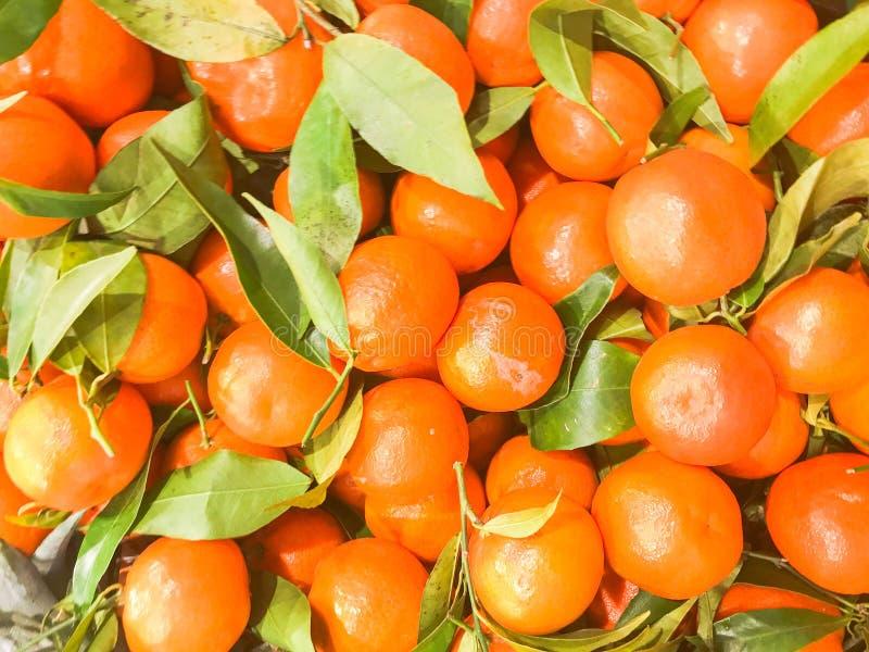 Pięknego żółtego naturalnego słodkiego smakowitego dojrzałego miękkiego round jaskrawi jaskrawi tangerines, owoc, clementines Tek zdjęcie stock