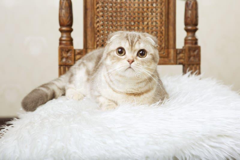 pięknego kota krzesła siedzący rocznik obraz royalty free