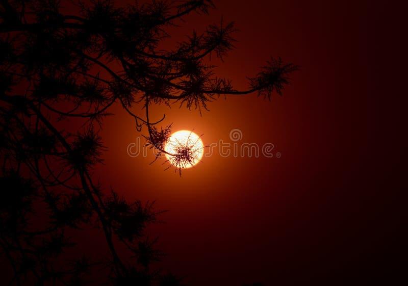 Pięknego naturalnego zmierzchu tła unikalna fotografia fotografia stock
