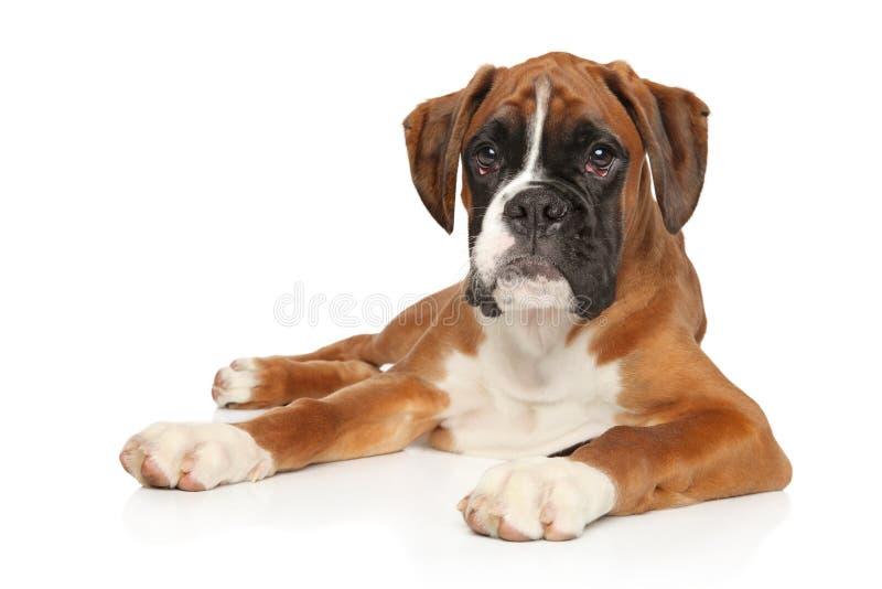 Pięknego Niemieckiego boksera szczeniaka łgarski puszek zdjęcia royalty free