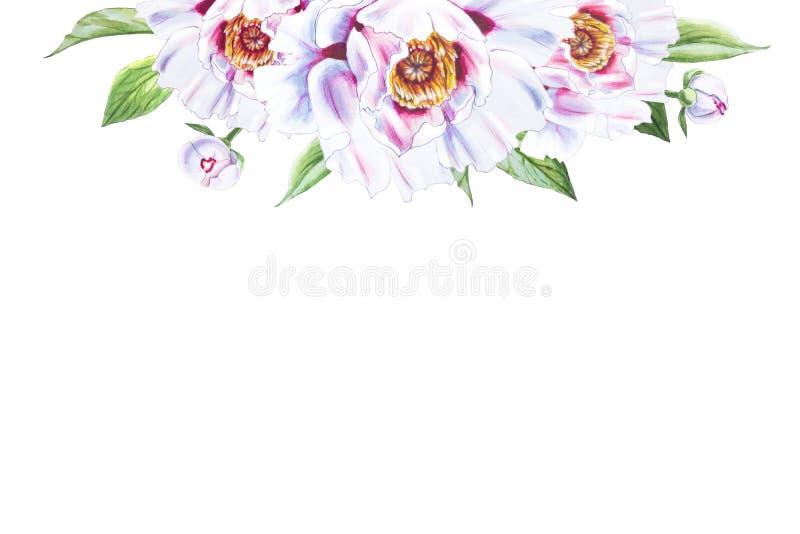 Pięknej białej peoni górna rama Bukiet kwiaty Kwiecisty druk Markiera rysunek ilustracja wektor