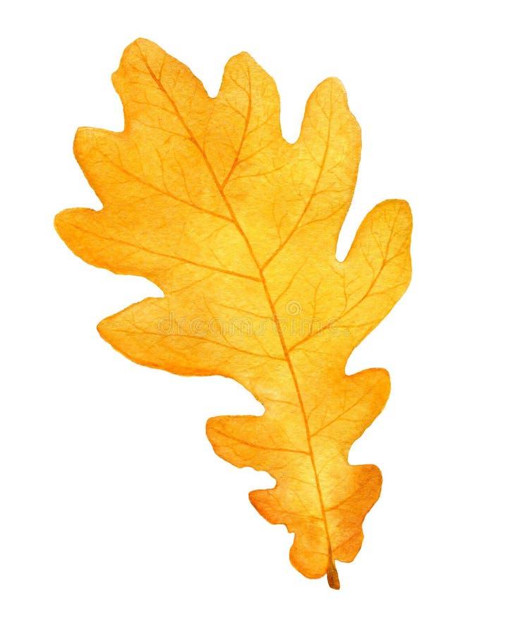 Pięknej jesieni akwareli dębowy liść na białym tle Spadek ilustracja zdjęcie royalty free