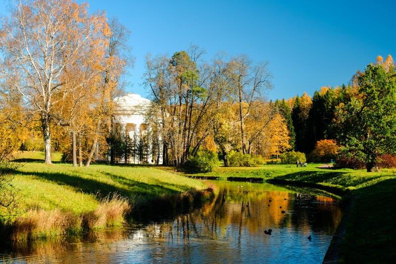 Pięknej jesieni pogodny krajobraz w Pavlovsk parku z Slavyanka rzeką, pomarańcze liśćmi i świątynią przyjaźń, zdjęcie royalty free
