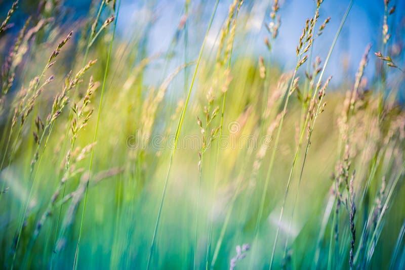 Pięknej lato łąki zamazany tło pod światłem słonecznym obrazy stock