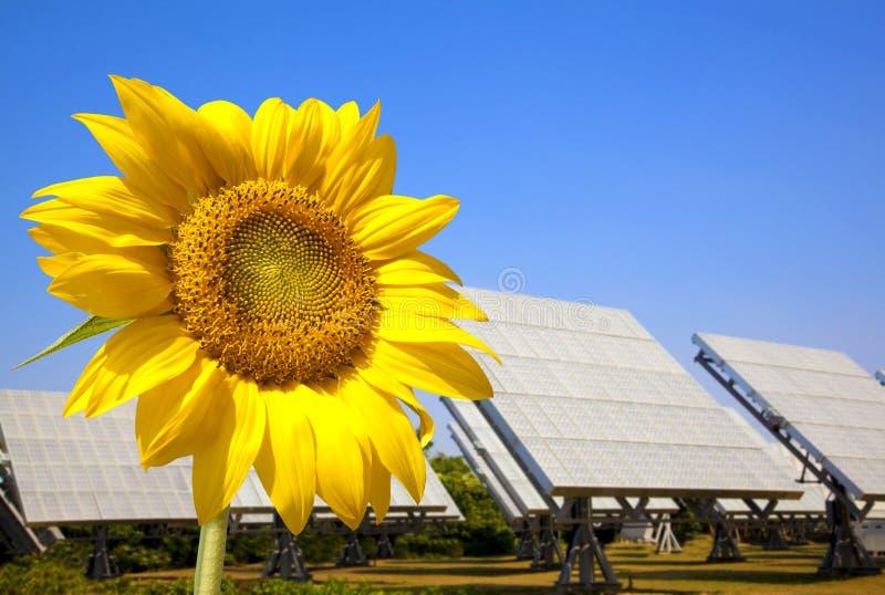 pięknej panelu planu władzy słoneczny słonecznik obrazy royalty free