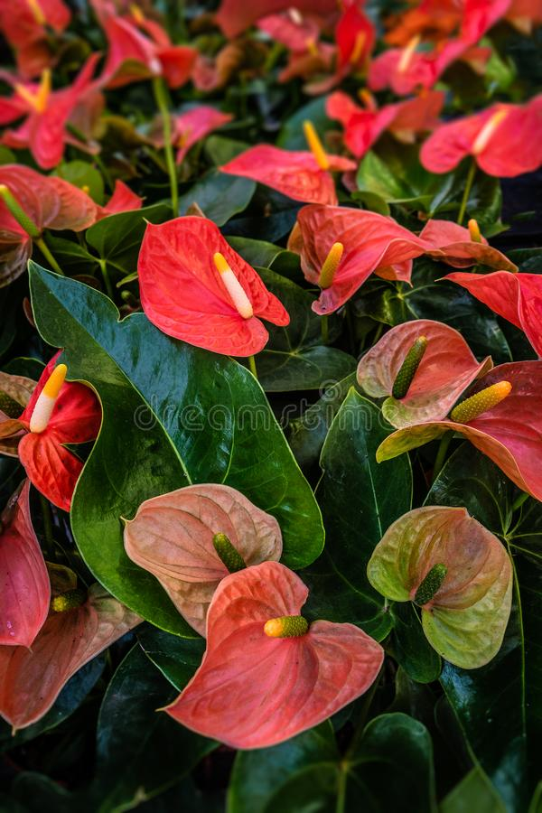 Pięknej tęczy kolorowi liście i kwiaty podczas jesieni w a obrazy stock