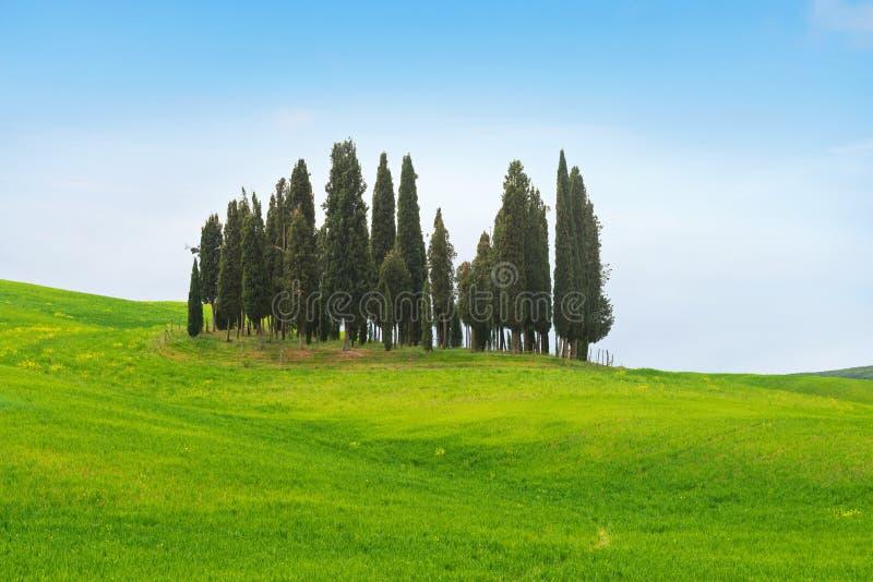 Pięknej wiosny minimalistic krajobraz z Włoskim cyprysem w Tuscany fotografia stock