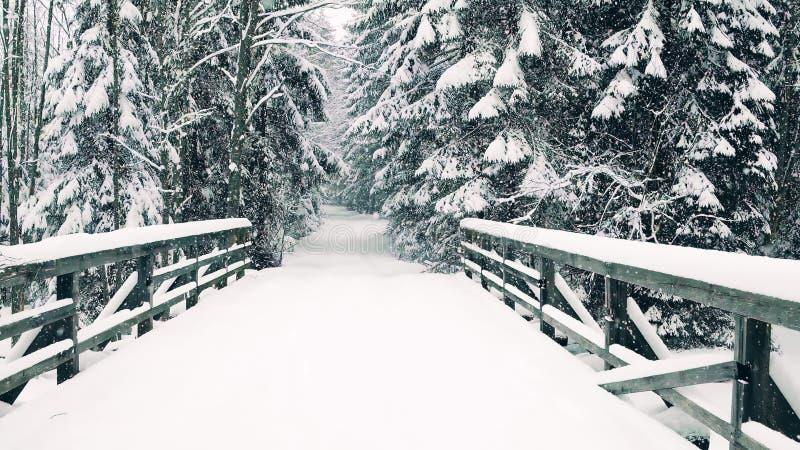 Pięknej zimy lasowa droga i most w spada śniegu obrazy royalty free