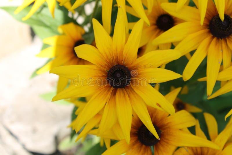 Piękni żółci floweers zdjęcia stock