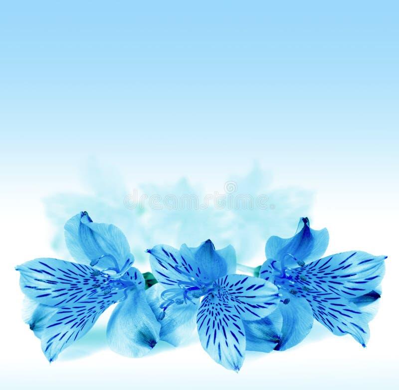 piękni błękitny kwiaty zdjęcia stock