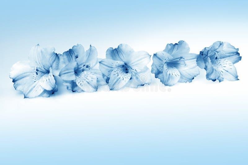 piękni błękitny kwiaty obraz royalty free