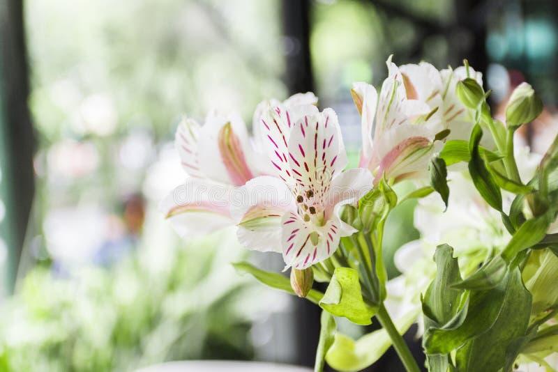 Piękni Biali i Różowi kwiaty na sobota rano zdjęcie stock