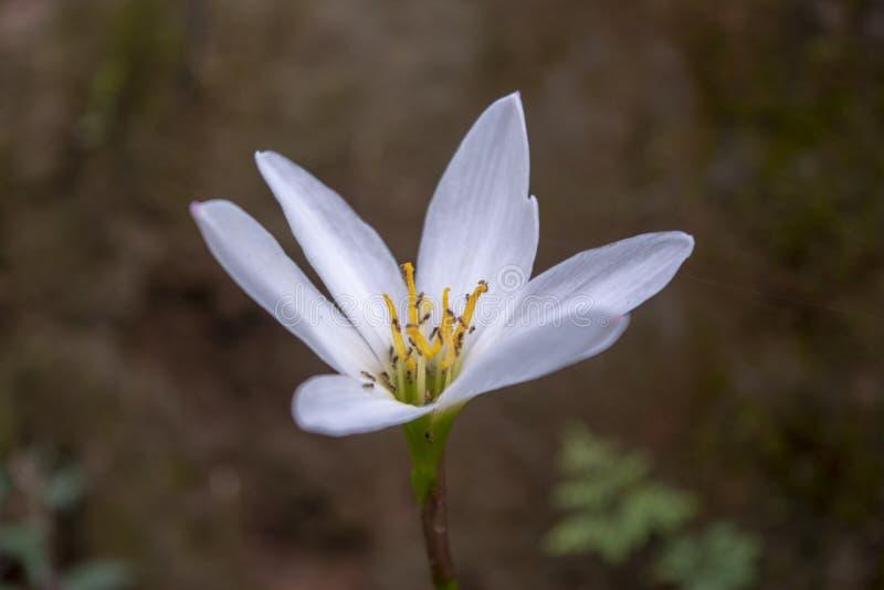 piękni biali kwiaty w ogrodowym zbliżeniu obrazy stock