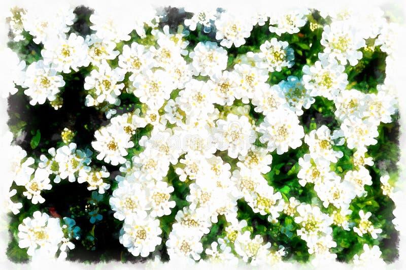 Piękni bielu ogródu kwiaty, plama komputer i tło obrazu skutek i obrazy royalty free