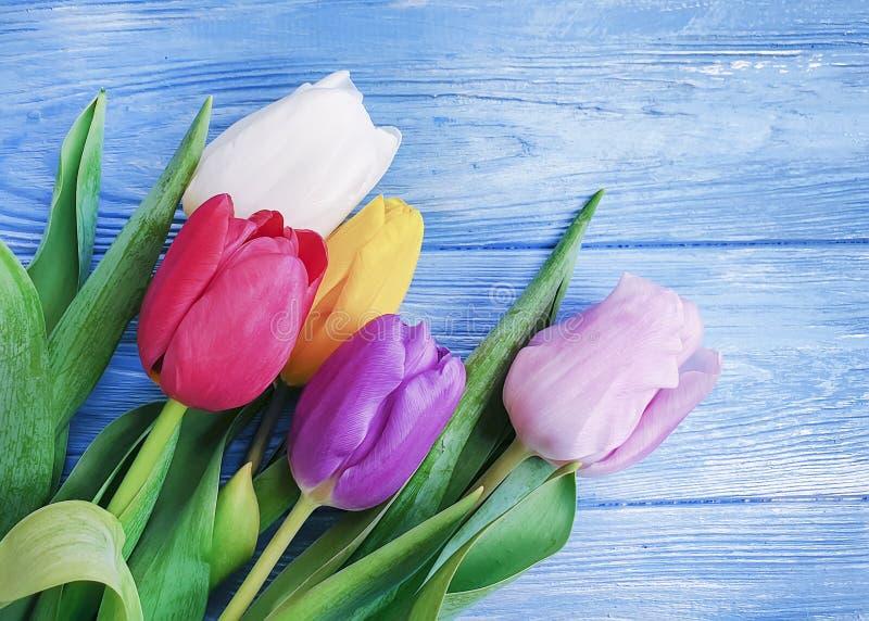 piękni bukietów tulipany na błękitnej drewnianej tło ramie obrazy stock