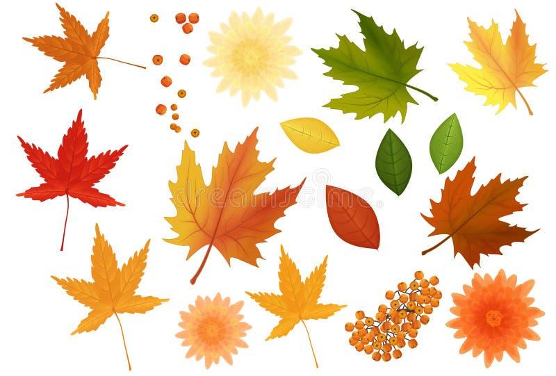 Piękni colourful realistyczni jesień liście, kwiaty ustawiający i Żółci złoci czerwieni zieleni keaves icolated royalty ilustracja