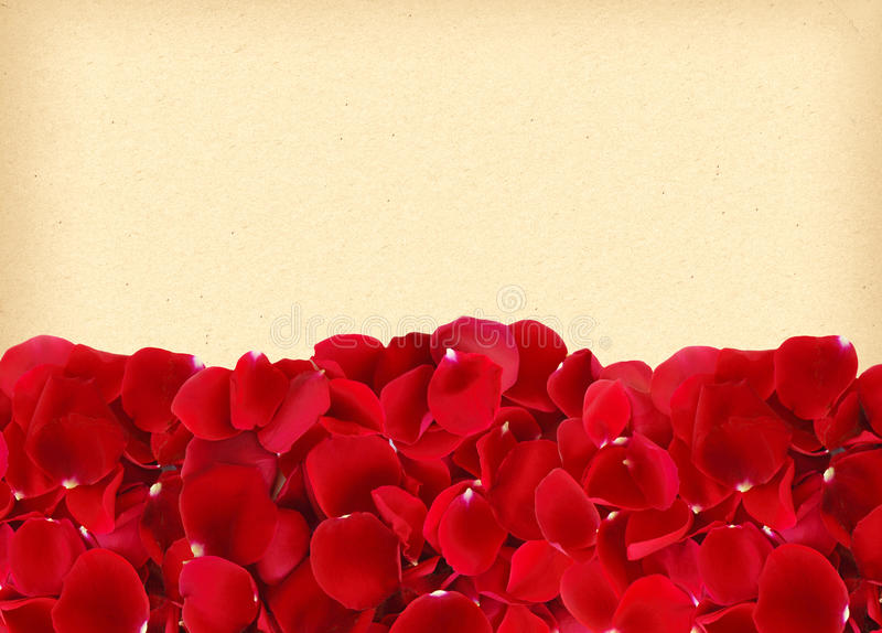 Piękni czerwieni róży płatki na starym kolorze żółtym tapetują zdjęcie stock