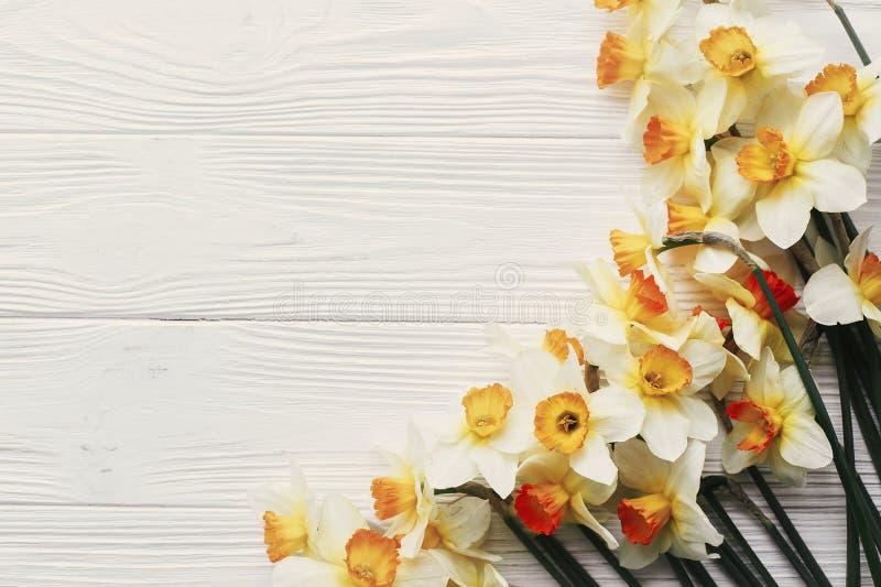 Piękni daffodils graniczą na białym drewnianym nieociosanym tło wierzchołku zdjęcie stock
