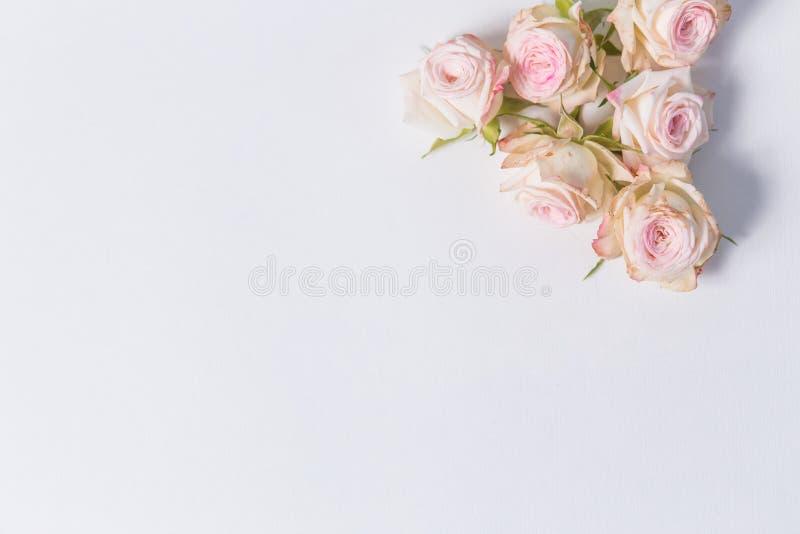 Piękni delikatni kwiaty rozpylają róże na białym tle w kącie z miejscem dla etykietki, zakończenie, odgórny widok zdjęcia stock