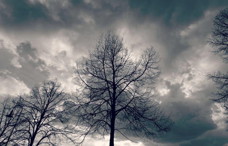 Piękni drzewa nad kruszcowym niebem i monochromem fotografia stock