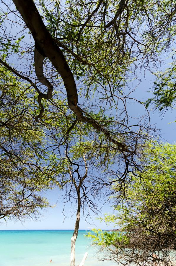 Piękni drzewa obramia spokój Waialea plaża zdjęcia stock