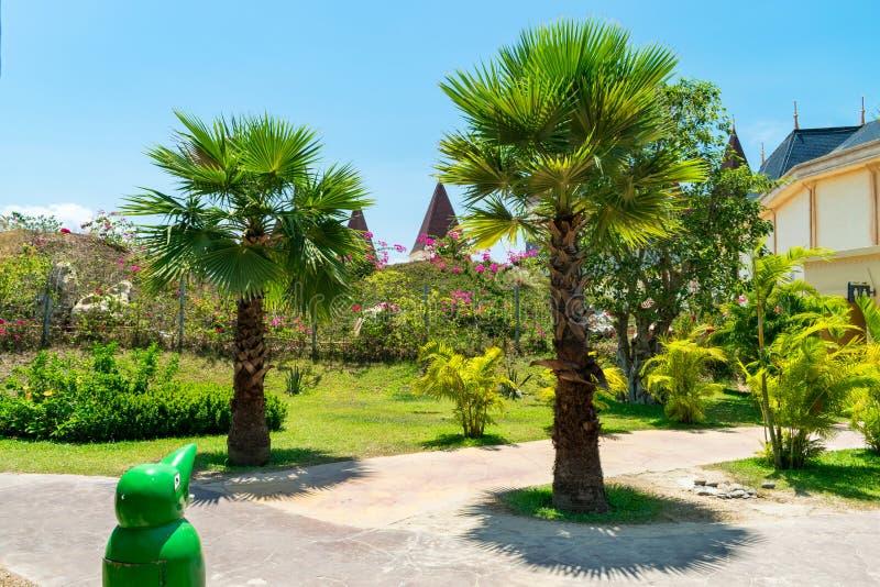 Piękni drzewka palmowe i krzaki w parku pod słońcem zdjęcia stock